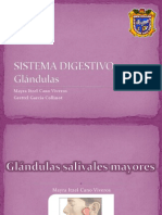 glndulassalivalesmayores-100721114837-phpapp01