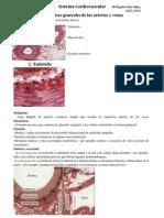 Tema 1 Sistema Cardiovascular.pdf