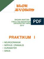Blok Nervosum