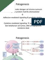 MM - Patogenesis