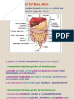 C2_Intestinul gros+Glande.ppt