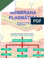 Membrana Plasmatica Slides