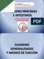 Duodeno Pancreas e Intestino