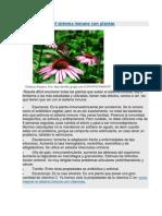 Como Mejorar El Sistema Inmune Con Plantas