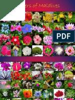 Flowers of Maldives