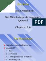1ESC 590.Soil Biota.1