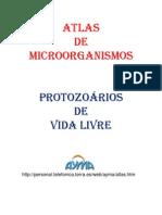 Atlas de Microorganismo3