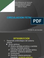 CIRCULACION FETAL(Seminario Oficial)