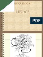 Lipido Cuaderno Suncp 100715203707 Phpapp02
