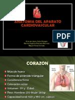 Anatomia Del Aparato Cardiovascular