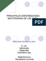 Principales Enfermedades Bacterianas de Las Aves