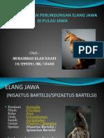 Upaya Pelestarian Elang Jawa Di Pulau Jawa Serta