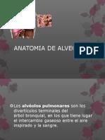 Anatomia de Alveolos