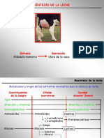 Clase3A-Biosintesis de La Leche