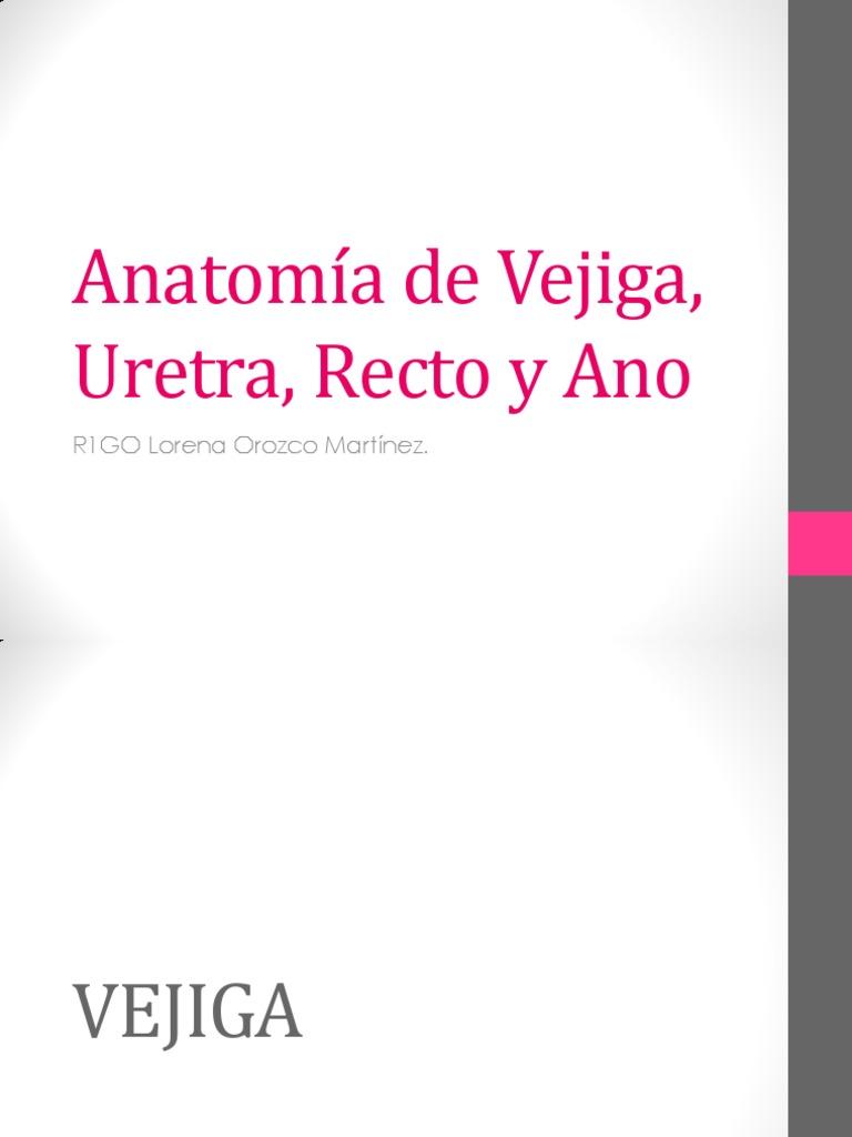 Anatomía de Vejiga, Uretra, Recto y