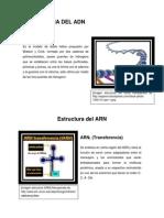Estructura Del Adn(1)