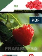 Estudio de Factibilidad Inversion Frambuesa en Peru