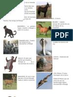 Animales de Las Tierras Virgenes