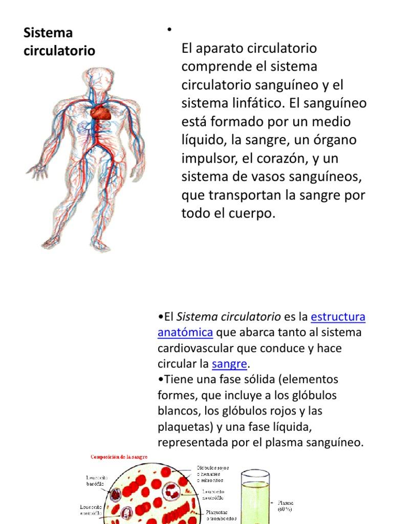Sistema Circulatorio 5