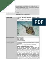 Rhinobatos cemiculus_CEEA_10 11