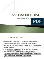 procesos sistema digestivo9.pptx