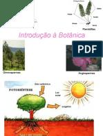3204881 Biologia PPT Botanica Introducao