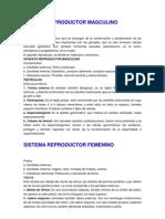 Sistema Reproductor Masculino Resumen