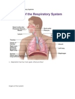 chapter 16 - respiratory