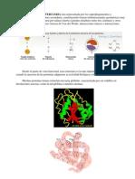 PROTEiNAS3_Estructura_terciaria.pdf