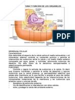Estructura y Funcion de Los Organelos