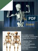 Diapositiva del tejido oseo