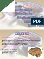 expo-neuroanato2003-1227220908282434-9