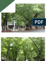 Plants in Japan + ความหลากชนิดของเฟิร์น (fern) และการใช้ประโยชน์