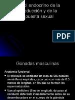 REproduccion de Fisio El Bueno