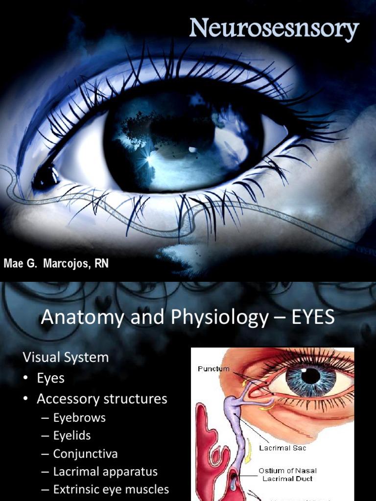 Neurosesnsory EYES | Human Eye | Glaucoma