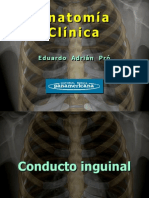 Clase 6-1 Conducto Inguinal