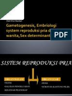 Gametogenesis, Embriologi System Reproduksi Pria Dan Wanita,Sex