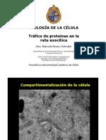 Clases+11%2C+14+y+15+RE%2C+Golgi%2C+Transpote+Intracelular
