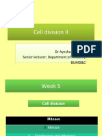 Cell Division II