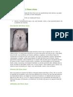 Nuevo Documento de Microsoft Word (14)