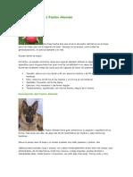 Nuevo Documento de Microsoft Word (26)