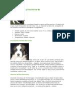 Nuevo Documento de Microsoft Word (29)