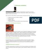 Nuevo Documento de Microsoft Word (31)