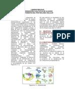 Laboratorio No 5 Componentes Del Protoplasma (3)