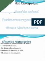 Presentación1nicasio
