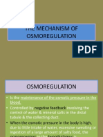The Mechanism of Osmoregulation