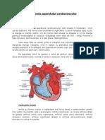 44743883 Anatomia Aparatului Cardiovascular
