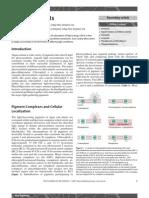 Algal pigments.pdf