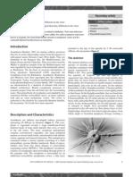 Acantharia.pdf