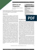 arabidopsis thaliana as an expt organism.pdf